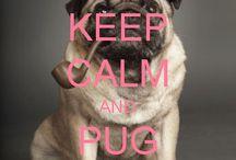 Animal Pics & Sayings / Cute Pics of Animal with sayings on them