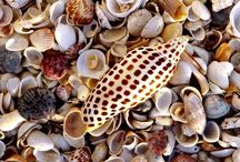 shells and snails