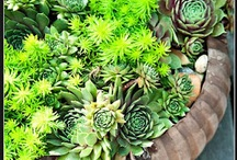 i love these plants :) / by Julie B