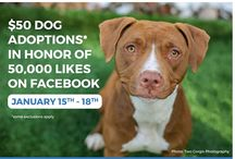 SPECIALS! / Adoption specials and events involving KCPP.