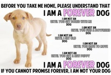 Dog Quotes / Our favorite quotes about dogs for all dog enthusiasts - from funny to meaningful and everything in between.