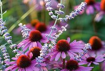 E -- Flowers