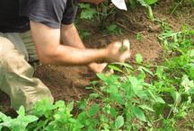 Survivaltrainings / Bushcraftkurse / Tätigkeiten während meiner Kurse im Survival Camp an einem Survivalwochenende oder einem 5tägigem Kurs.