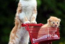 Cats xx