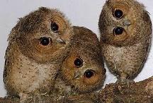 OWLS / by Ashley Davis