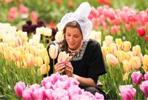 Weekend outing ideas / Tulip festival