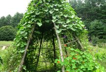 eko pestovanie