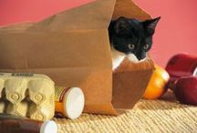 Cat toys / The best ways to entertain your cat.