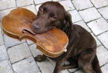 Música / Music / Imagenes de temática musical.  / Musical images.
