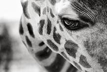 My favorite wild animal