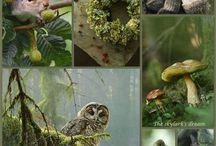 Лесные обитатели