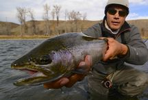 Fave Fly Fishing Photos from December 2015 / We have picked our top ten fishing pictures for December!