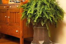 Inner Gardening / Garden Trend of 2012 - Decorating our inner gardens with houseplants for better, healthier lives is now the new norm. These natural oxygen machines clean indoor air while bringing life to any room. / by Garden Media Group