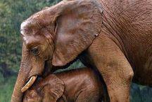 Embroderie elefanti