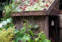 Green Roofts