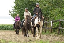 blog horse4life