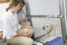 Animal Shelter Ideas