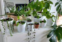 plantes vertes addict
