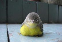 可愛い小鳥たち / フワフワで良い香りがしそう