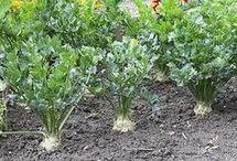 ültetés nevelés, permetezés