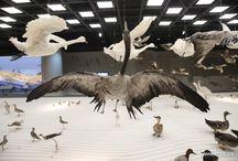 Natural Museum Shanghai