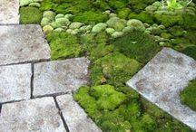 Jardins, Terrasse, plantes