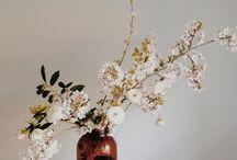 mimosa insta