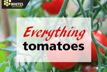 Everything Tomatoes / Everything Tomatoes