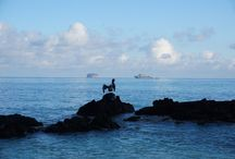 Your Complete Guide To The Galapagos