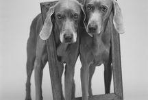 Dogs / Perros de todas las razas.  / by Carlos N. Suñer