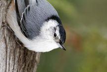 Wildlife photography / Birds and other wild animals
