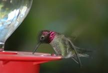 hummingbirds / by Lori Bevill