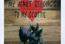 I love being a scottie mom / My darling Scottish terriers