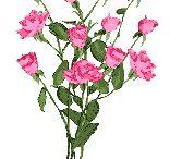 les fleurs représentent la purereté l Amour l amitiée,enfin la nature.....votre amie  Brigitte bisouss