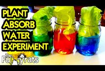 DIY Science Experiment Videos / This is a collection of Science Experiments that I have done. Some are suitable for kids, some are not! More videos at http://youtube.com/TheFunnyrats / by LaneVids & TheFunnyrats