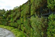 Groene wanden / muren / Eetbare wanden / Inspiratie over groene muren/wanden