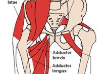 Anatomie Heup