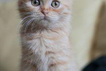 Meow, that's a pretty kitty!