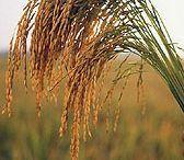 Gllobal plant resurs.