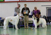 Dogshow Int. NKK Rogaland og RMKs Open show / Luna and Satchmo