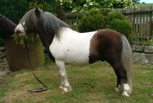 Tobianos with Face Markings / The ponies on this board have more white on their faces than a small star, and come from breeds where the solid (non-tobiano) individuals do not typically have white markings.