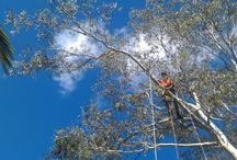 Tree Lopping / Make your yard beautiful again with professional help. Treezy provides the comprehensive and thorough tree cutting Brisbane Southside can rely on to be delivered on time and under budget. Restore your garden to picture-perfect beauty, or get a bit more sunlight for some starving plants and watch your yard bloom again.