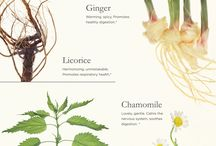 Herbology / Everything and anything about herbs and their healing powers.