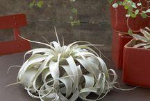 Plants & Flowers / by Marlene Giusti