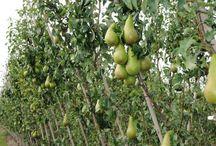 Orchard ideas