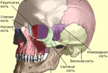 Анатомия Человек