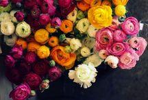 Flowers / by Allison Tanzer