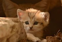 too cute for words  / by Laura Ashikaga