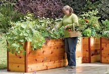 Zahrada, pěstování, kultivování, venkovní úpravy...