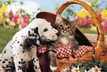 ♥A única maneira de ter amigos é ser amigo.♥